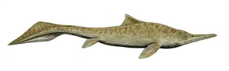 Ictiosaurio