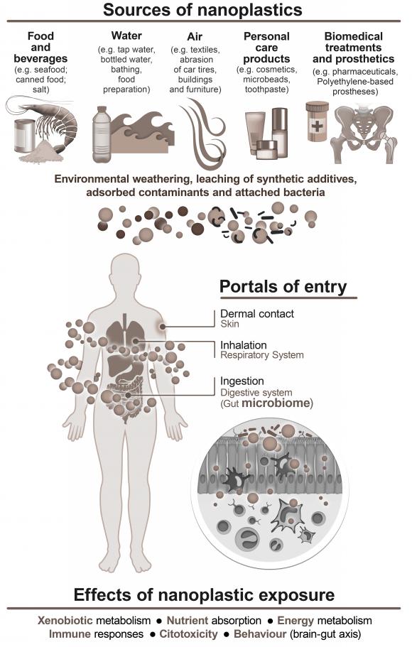 nfografía sobre las fuentes, vías de entrada en el organismo y efectos de los nanoplásticos.