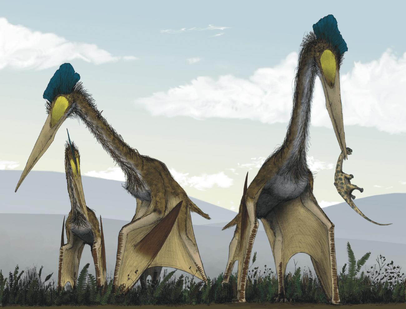 Reconstrucción artística de la vida de los azdárquidos gigantes. Grupo de Quetzalcoatlus northropi, alimentándose en una pradera de helechos cretáceos. Puede observarse a un Titanosaurio juvenil que ha sido capturado por uno de los Pterosaurios, mientras que los otros acechan a través de los matorrales en busca de pequeños vertebrados. /© Mark Witton