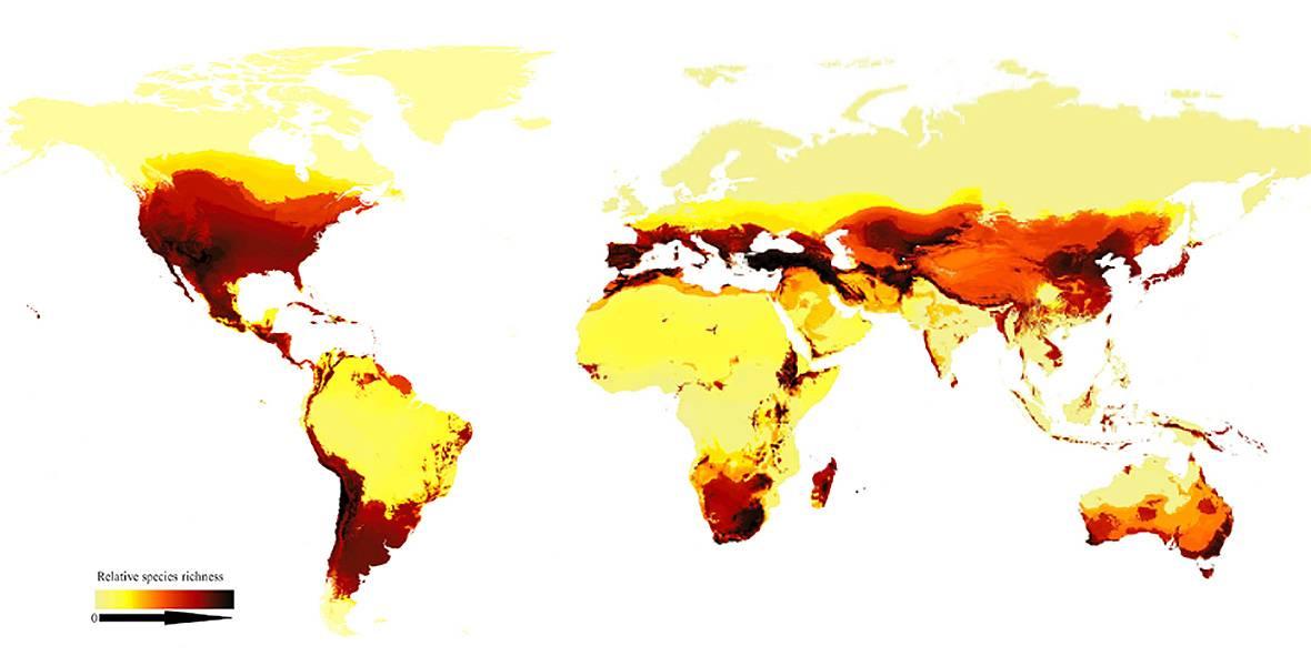 Este mapa muestra la riqueza de especies de abejas en todo el mundo y representa el gradiente latitudinal bimodal. Las zonas más oscuras tienen más especies. / Current Biology