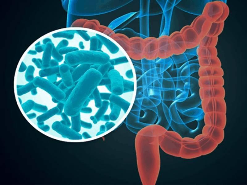 microbiota bebé