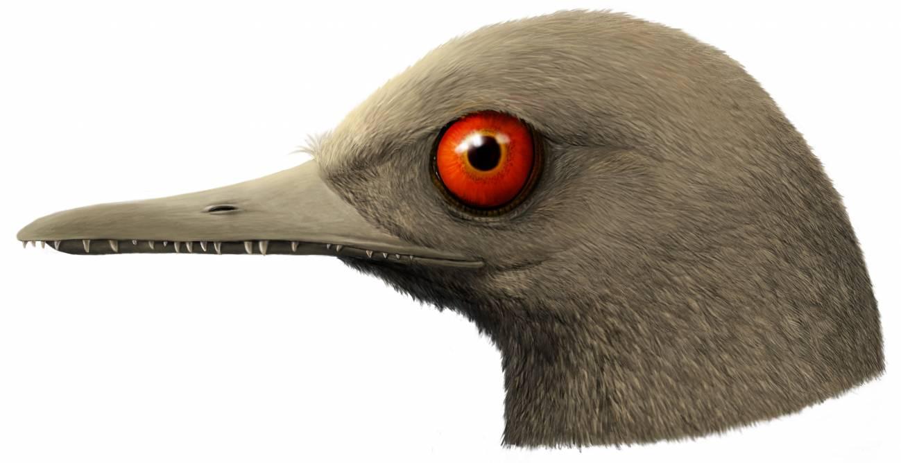 Nueva especie de dinosaurio diminuto