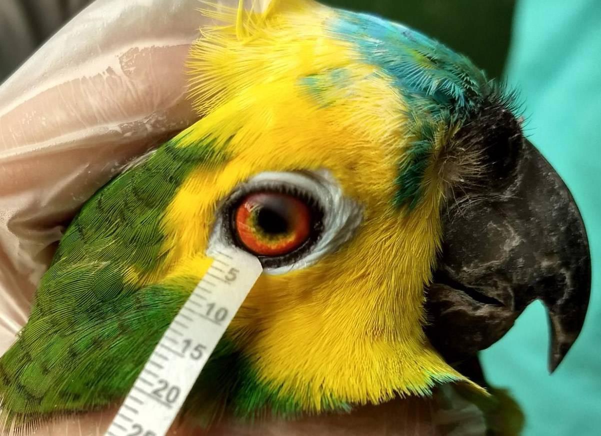 Ojo de ave
