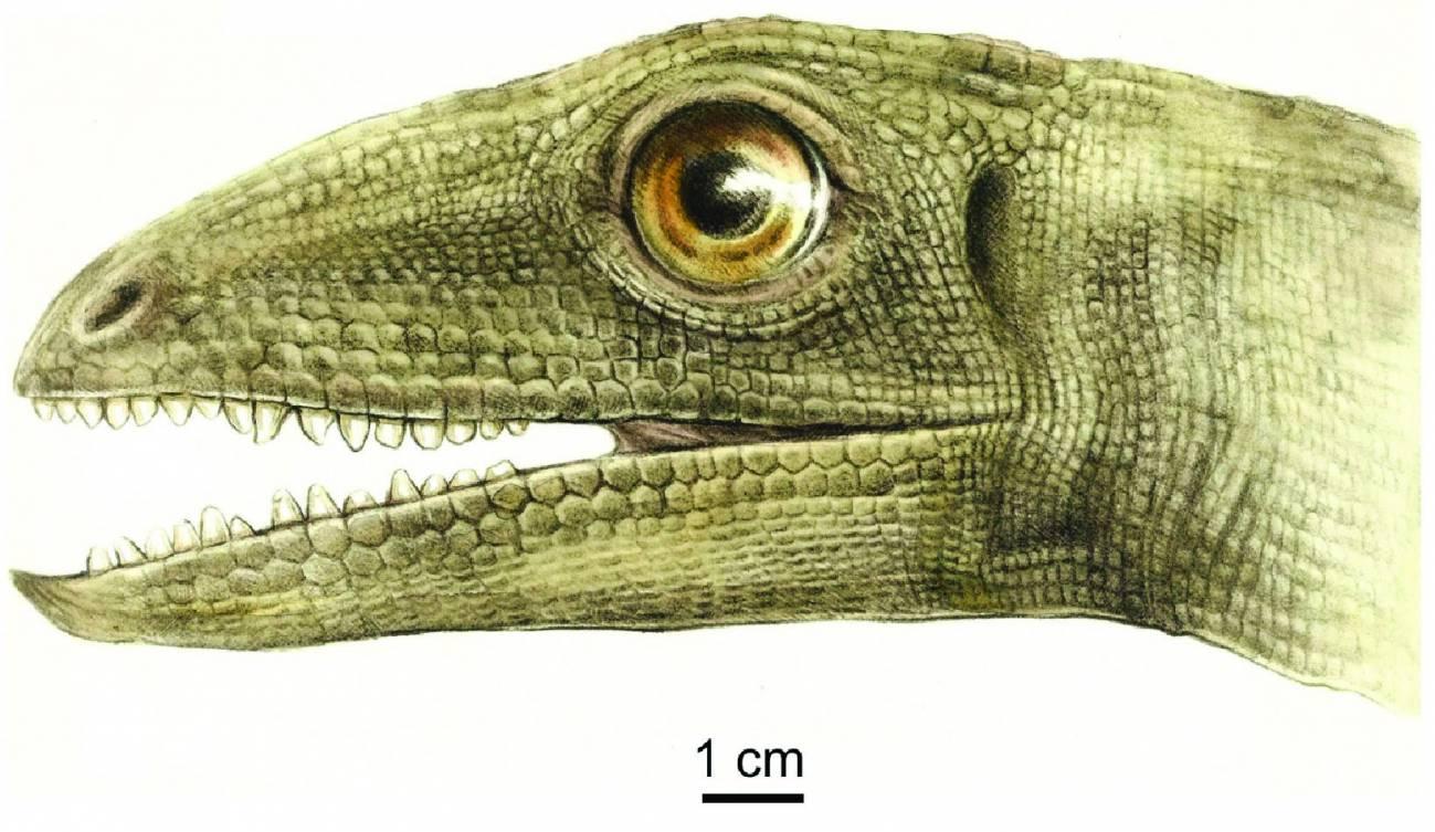 Pariente de dinosaurio