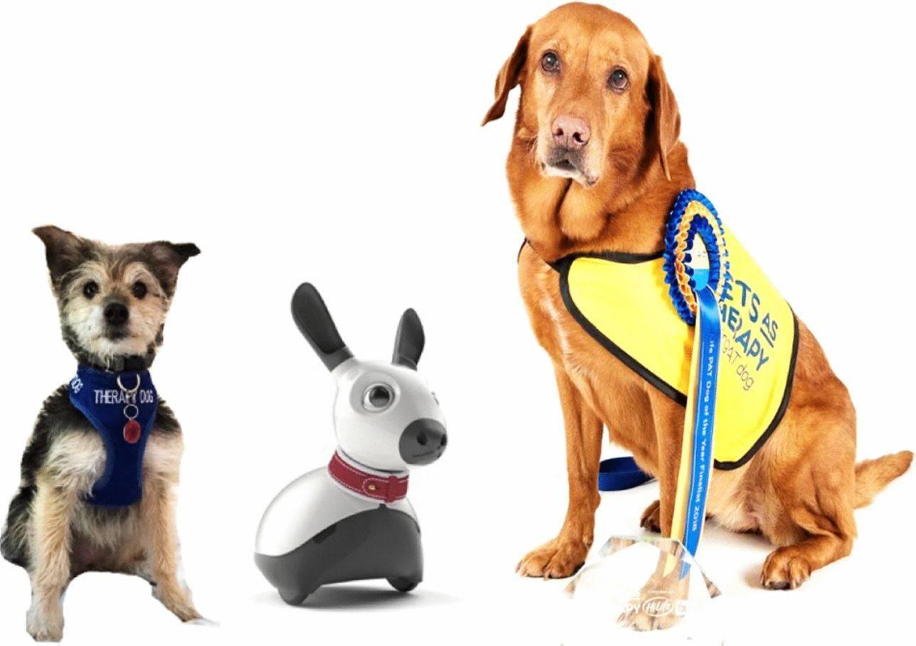 Perros y robot