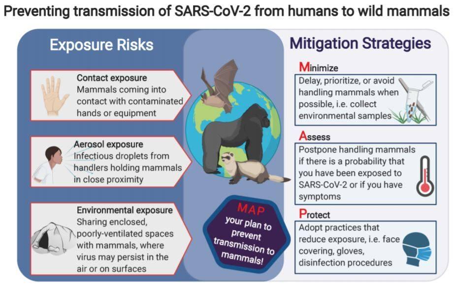Recomendaciones - ¿ Que pasaría si los animales salvajes se contagiaran de coronavirus?