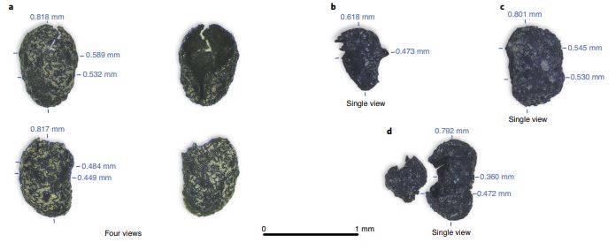 Semillas carbonizadas