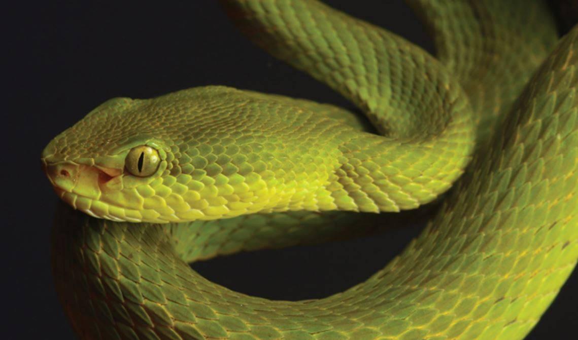 Serpiente de Salazar