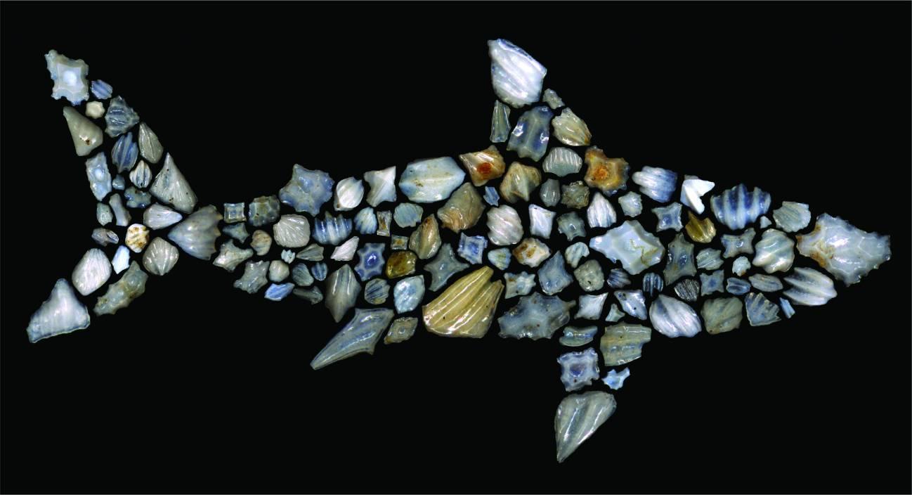 Silueta de un tiburón compuesta por dentículos dérmicos de tiburón fósil descritos en este estudio. Su morfología varía considerablemente entre diferentes especies de tiburones. / Leah D. Rubin