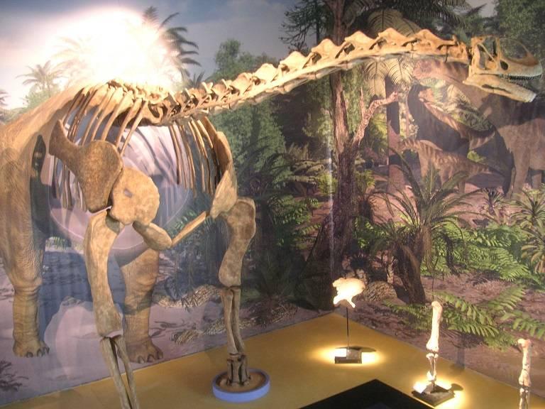 Reconstrucción de un Turisaurus