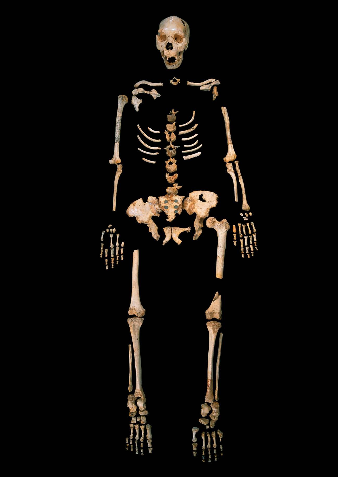 """Esqueleto de """"Homo heidelbergensis"""", de la Sima de los Huesos (Burgos). / Madrid Scientific Films"""