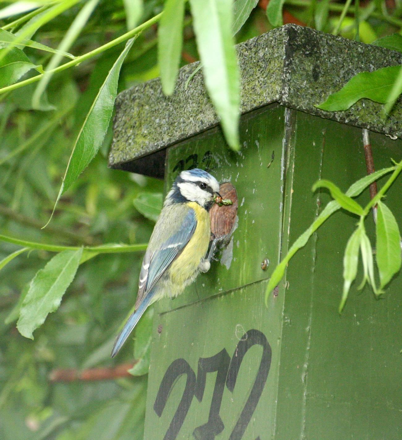 Las aves pueden detectar a sus depredadores por su olor