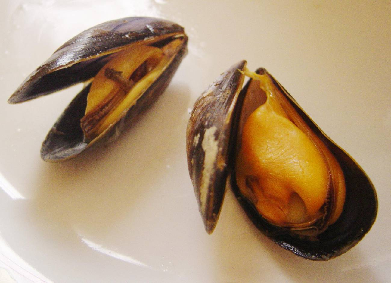 Mejillones cocidos. / Wikipedia
