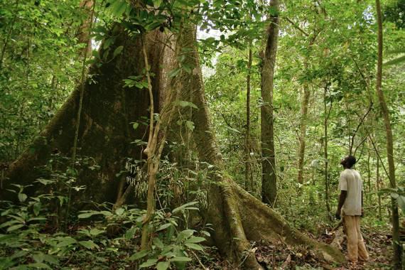 Bosque en Gabón, al oeste de África central / Axel Rouvin