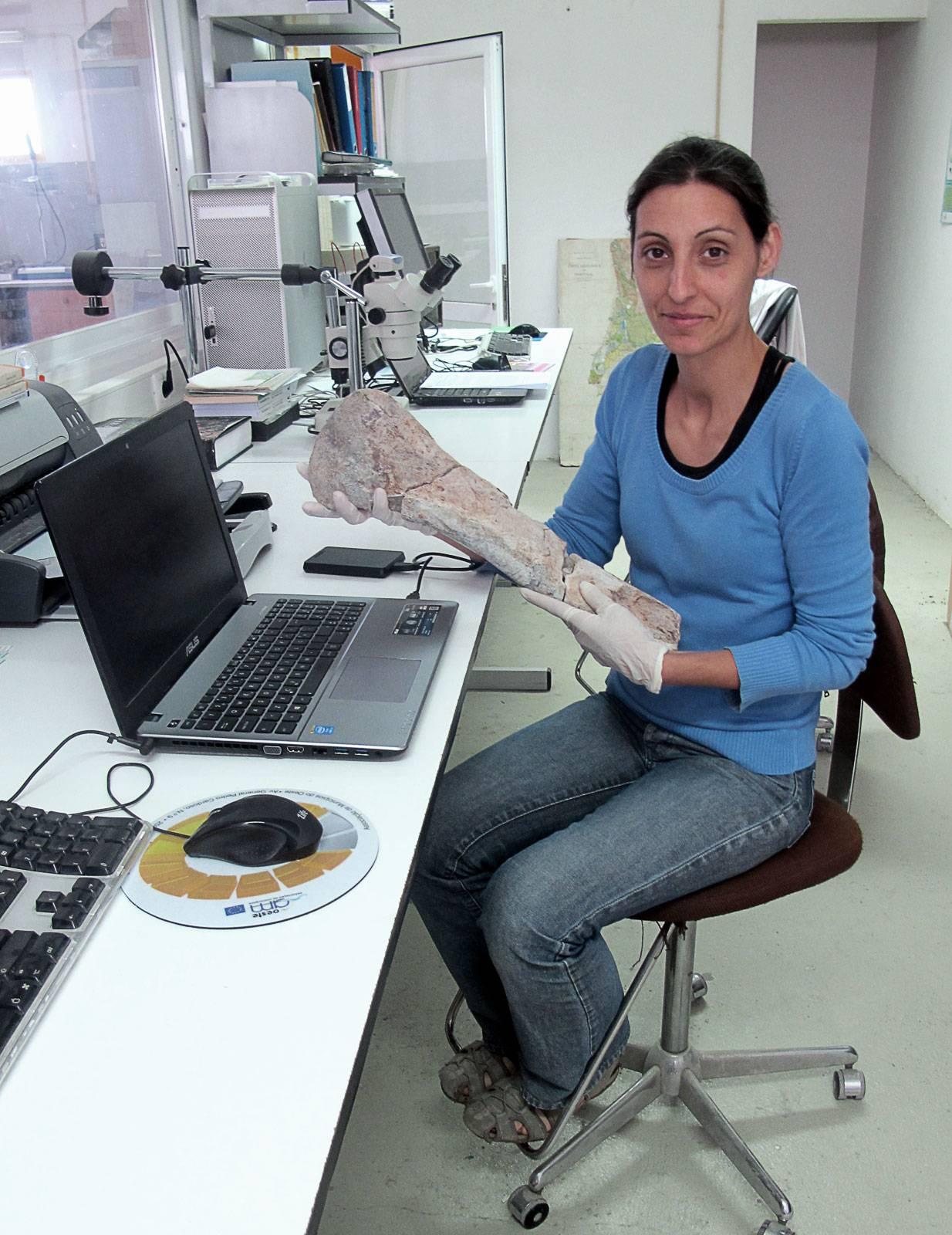 La investigadora Elisabete Malafia muestra un hueso de ceratosaurio en el laboratorio de la SHN / GBE-UNED.