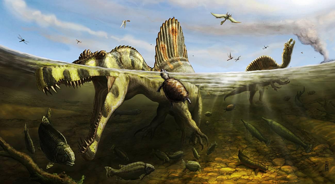 Recreación artística del 'Spinosaurus aegyptiacus'. / Brian Engh