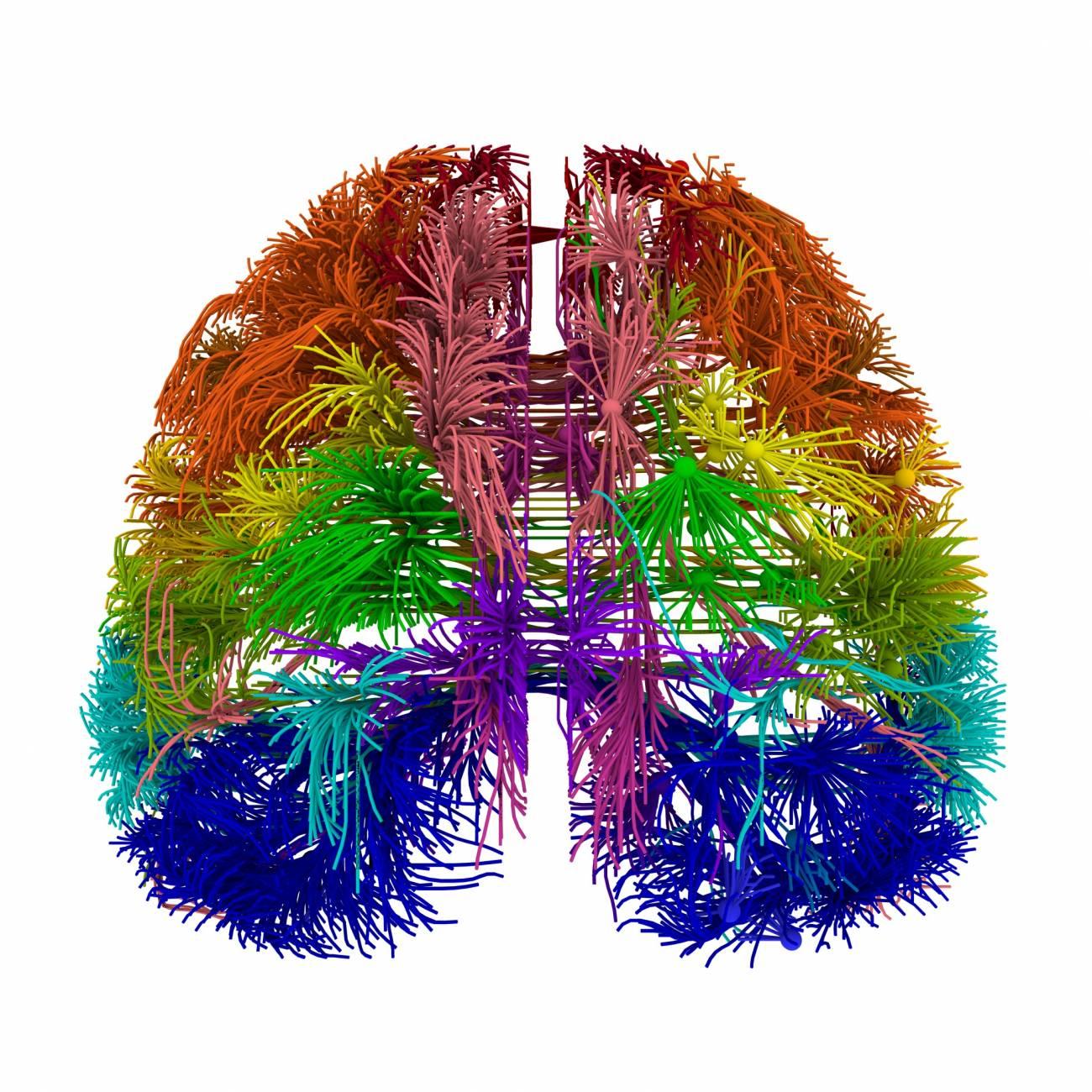 Recreación 3D del conectoma del ratón. / Nature