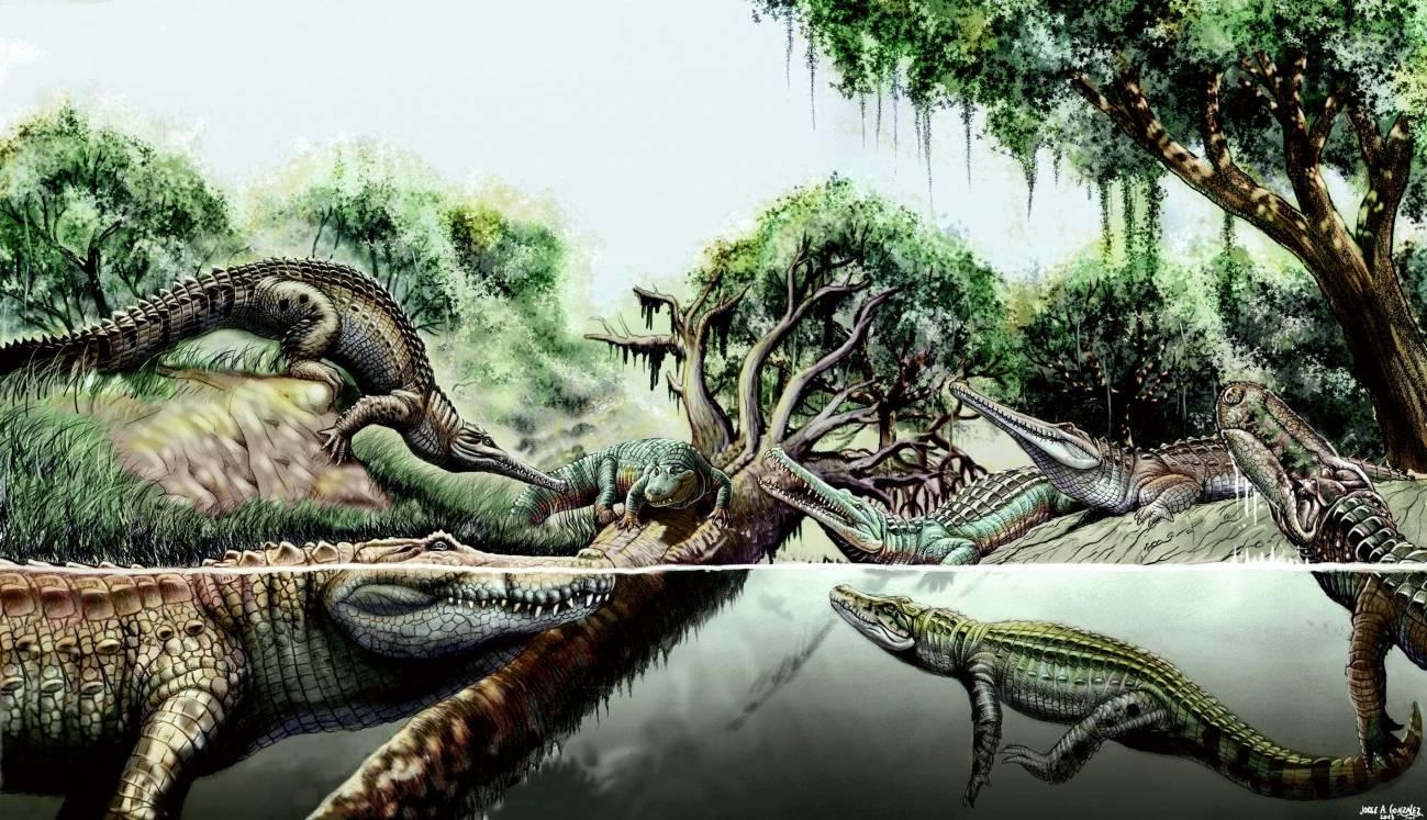 Reconstrucción de distintas especies de cocodrilo del Mioceno. / Jorge A. Gonzalez.