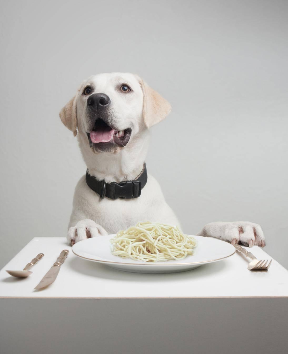 Las adaptaciones genéticas que permitieron a los perros asimilar el almidón fueron cruciales para que se convirtiera en un animal doméstico, según un estudio que publica la revista Nature.