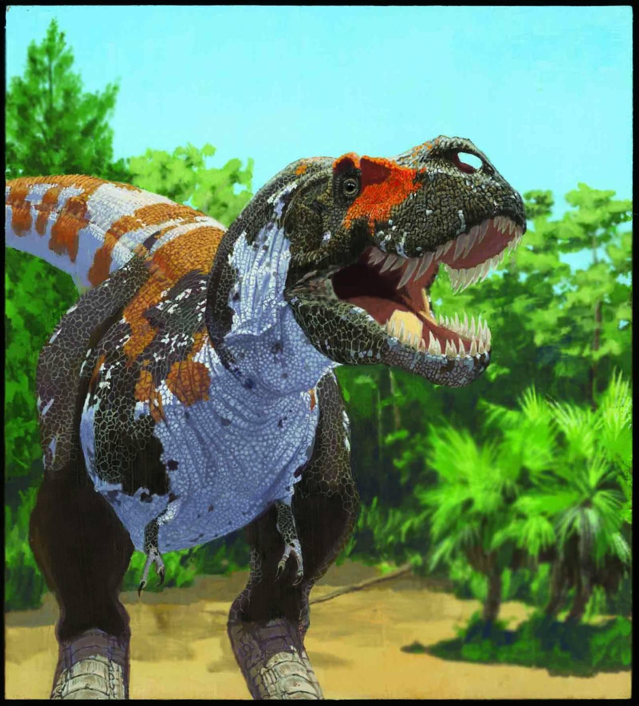 Los Tyrannosaurus rex forman parte del grupo de dinosaurios carnívoros cuya biodiversidad se mantuvo hasta la gran extinción. Imagen: AMNH/J. Brougham.