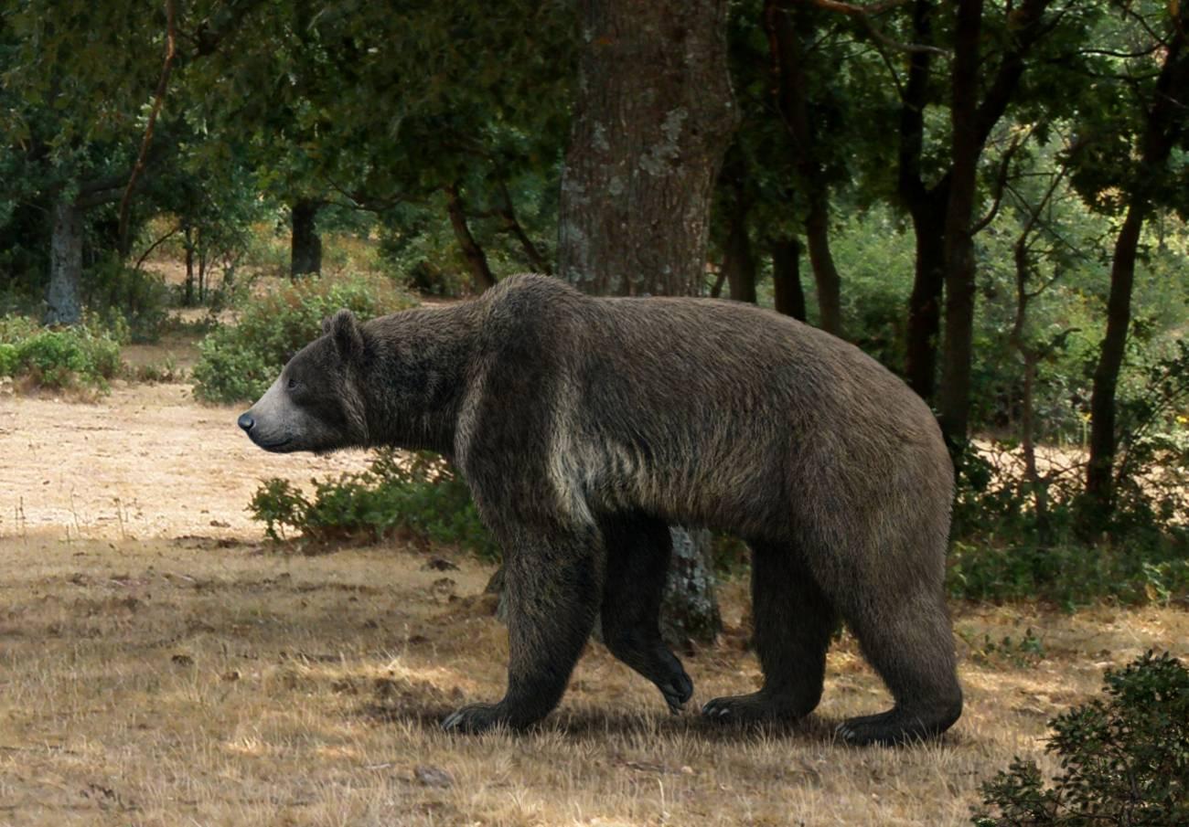 Ilustración del aspecto del oso Indarctos arctoides. / Mauricio Antón.