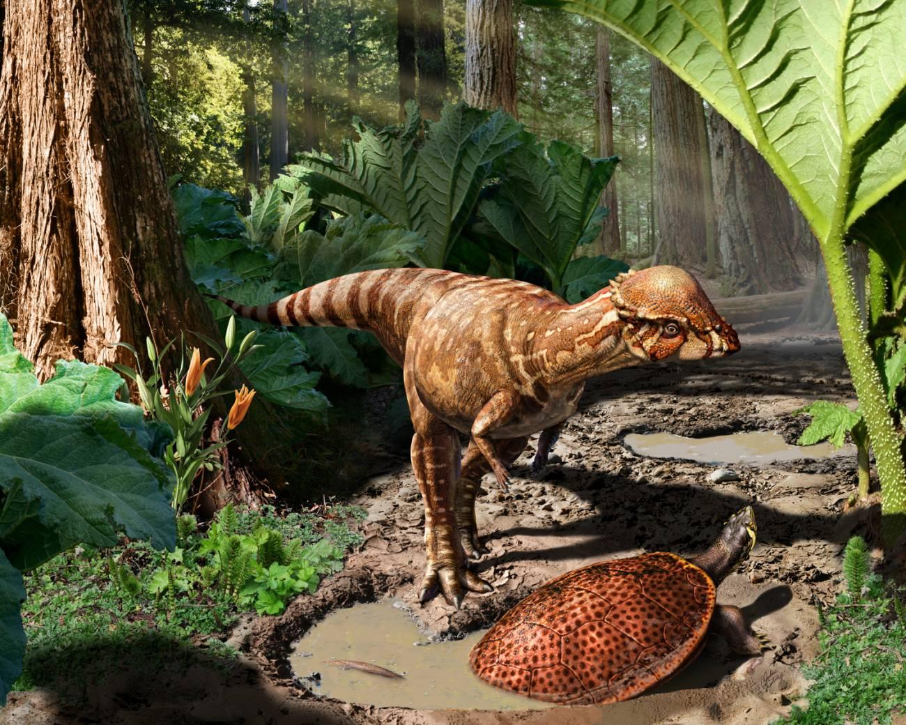 Recreación artística del dinosaurio Acrotholus audeti / Julius Csotonyi, Nature.