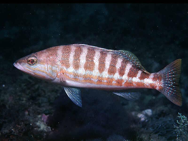 Las corrientes marinas influyen en la distribución de peces y hábitats