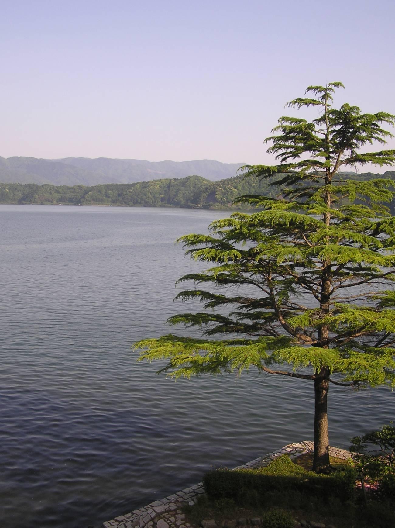 Lago Suigetsu en Japón. Imagen: Christopher Ramsey.