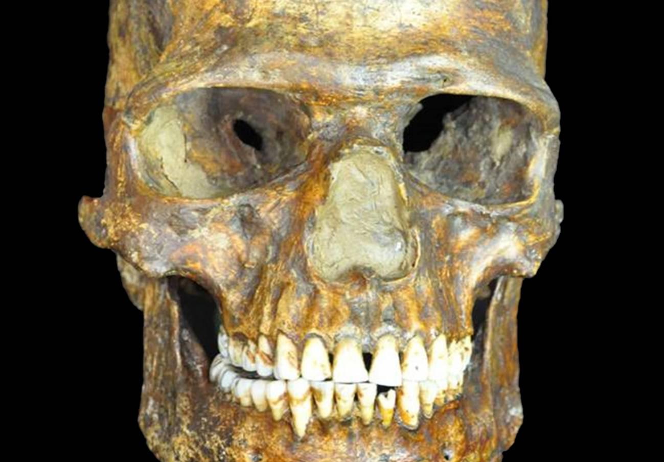Cráneo de K14. / Peter the Great Museum