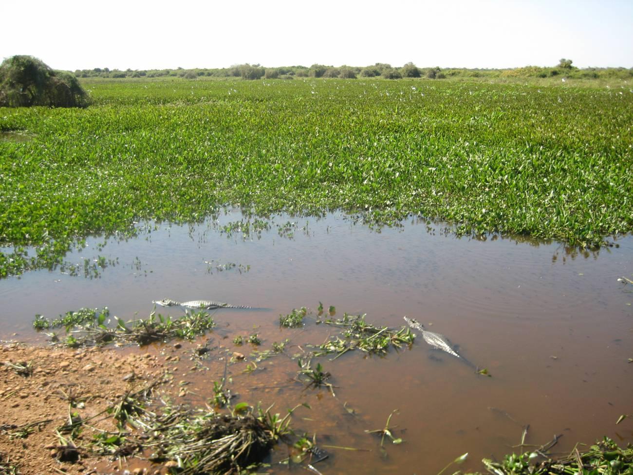 Humedal temporal en El Pantanal (Mato Grosso, Brasil). Imagen: Francisco A. Comín Serrano / CSIC.