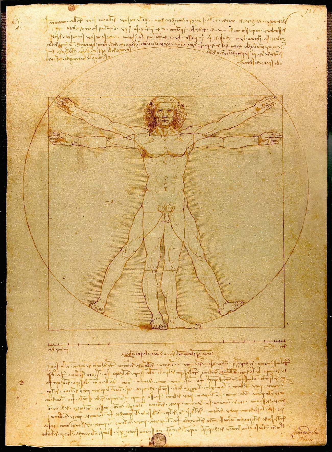 El hombre de Vitruvio. Obra de Leonardo da Vinci que representa un estudio de las proporciones de la figura masculina. Imagen: Wikipedia