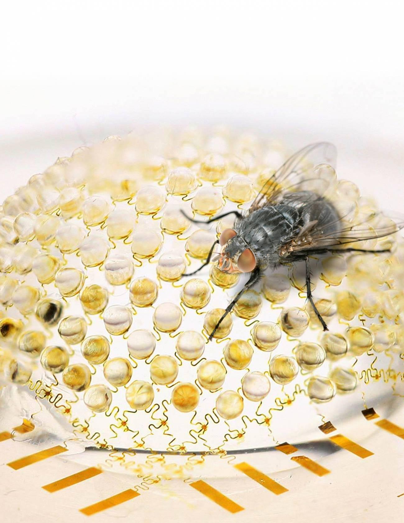 El diseño semihesférico de la cámara se inspira en los ojos de los insectos. / University of Illinois-Beckman Institute
