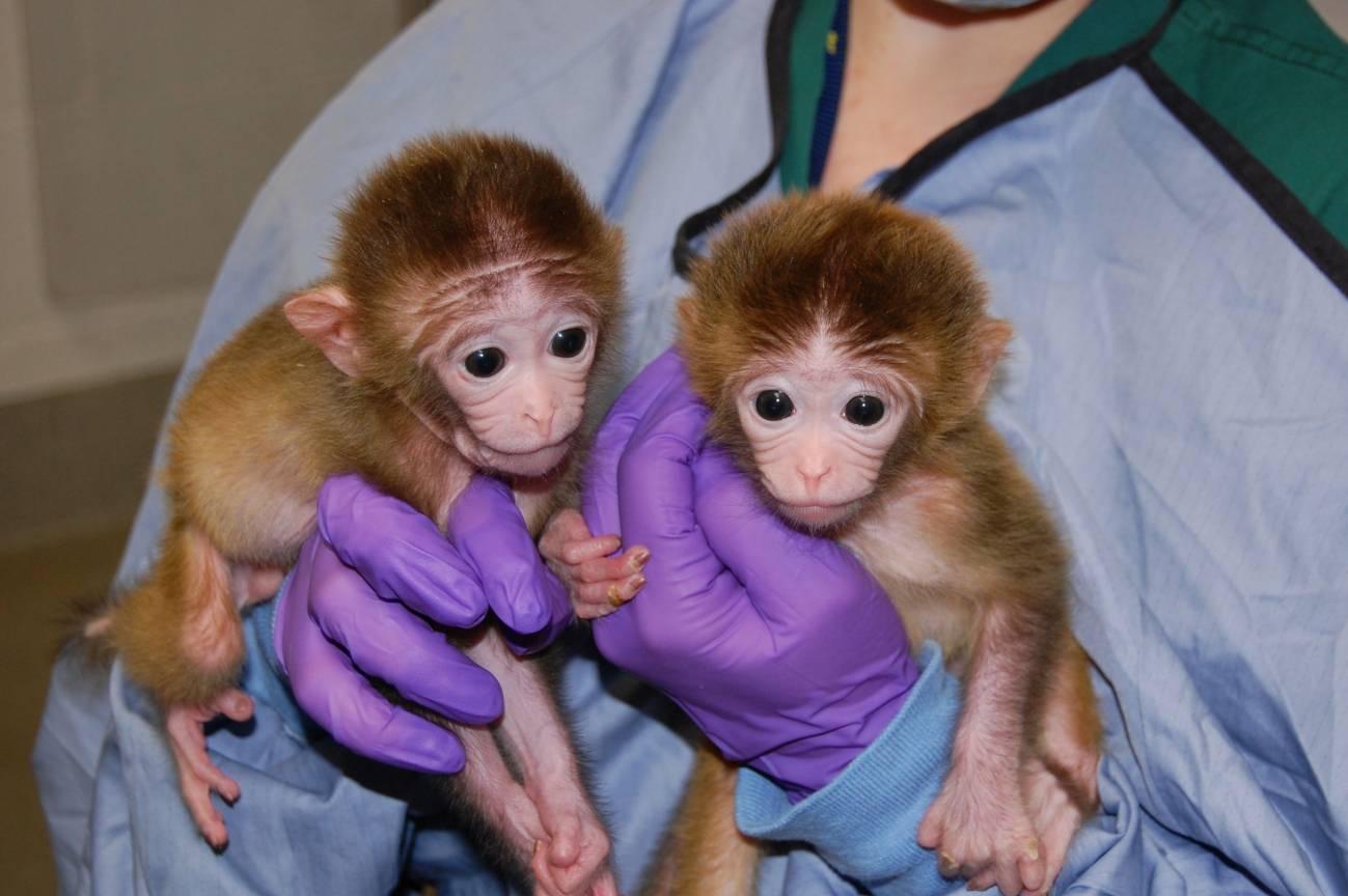 En la imagen, los monitos Roku y Hex en brazos de sus cuidadores.