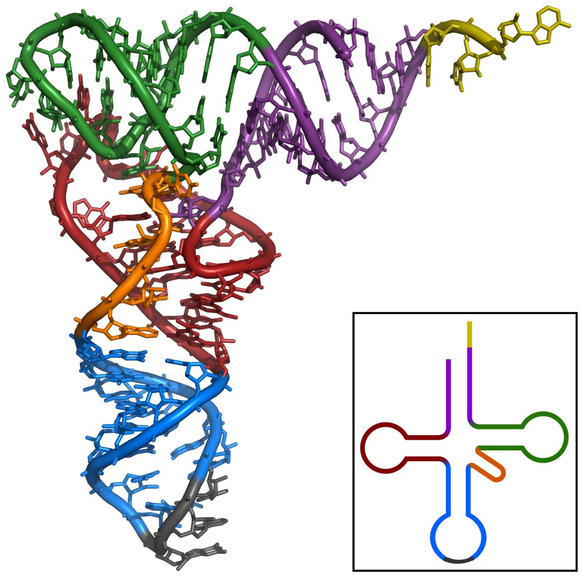 Estructura del ARN. Imagen: Wikipedia
