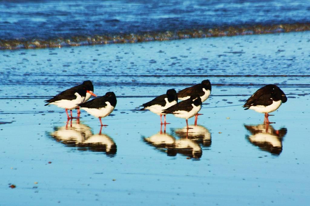 Se aprueba el Plan estratégico del Patrimonio Natural y de la Biodiversidad