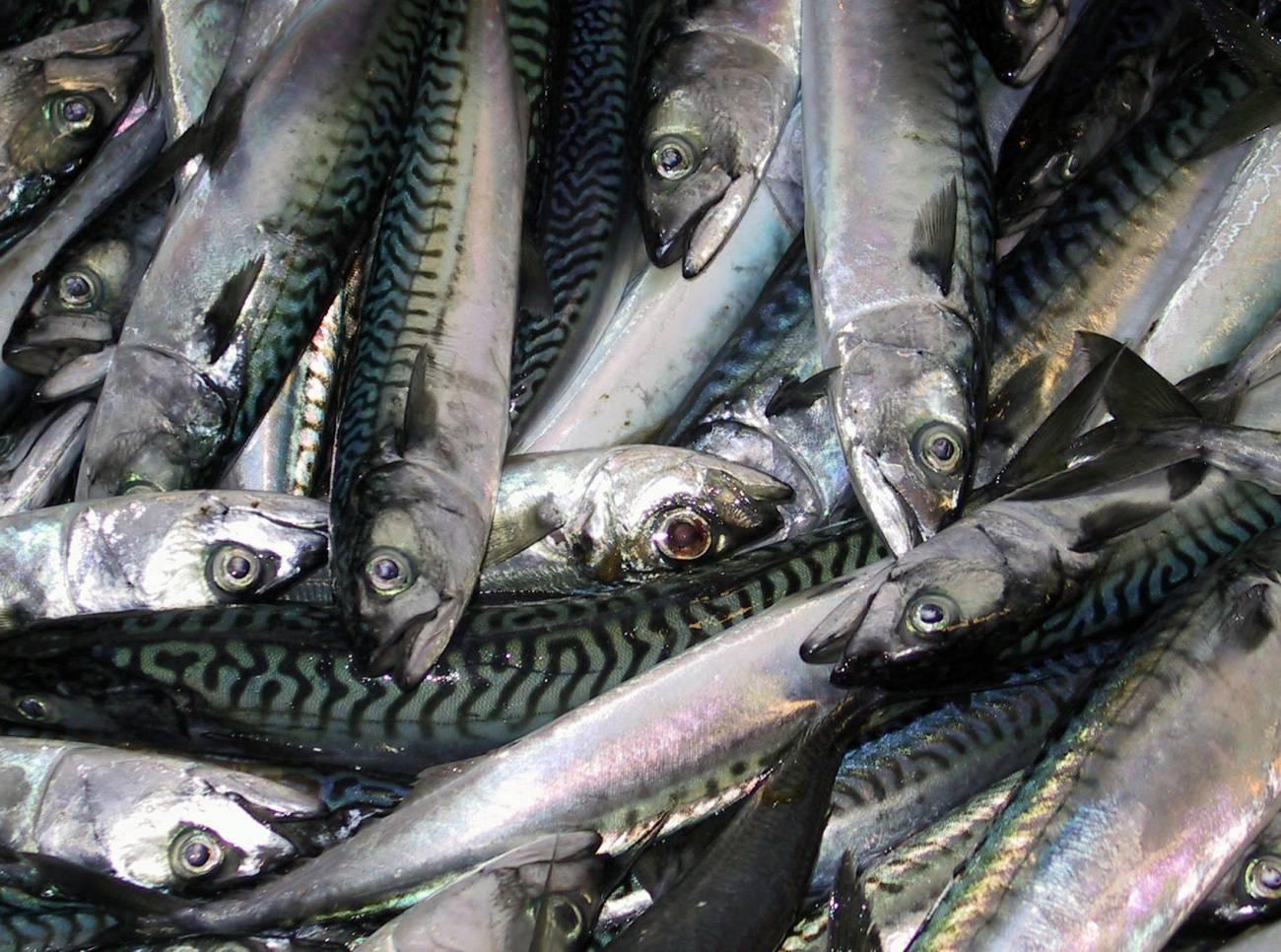 El equipo de investigación ha tratado de definir una red de gestión eficiente de los descartes que conecte en tiempo real a los diferentes actores implicados en la actividad pesquera. / SINC.