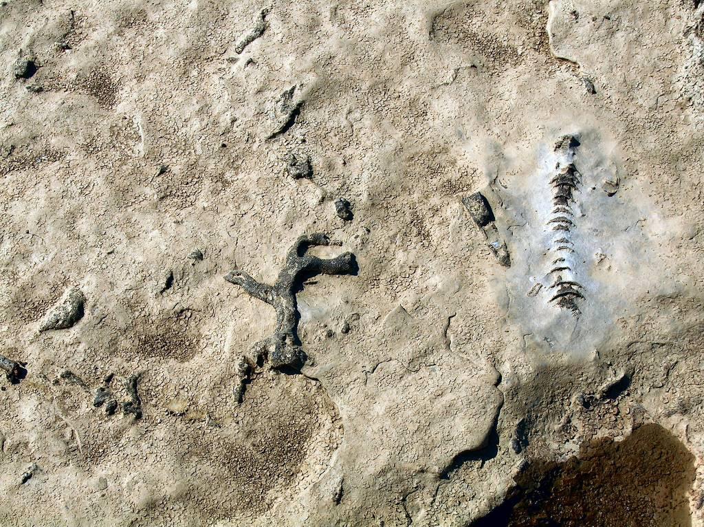 Los paleontólogos necesitan saber con seguridad si por un yacimiento pasó una corriente de agua / Cindy Cornett.