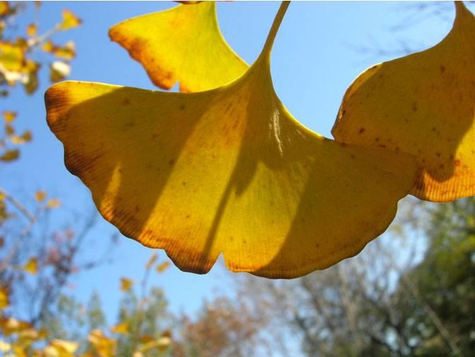 Un botánico español busca los refugios de flora prehistórica en China