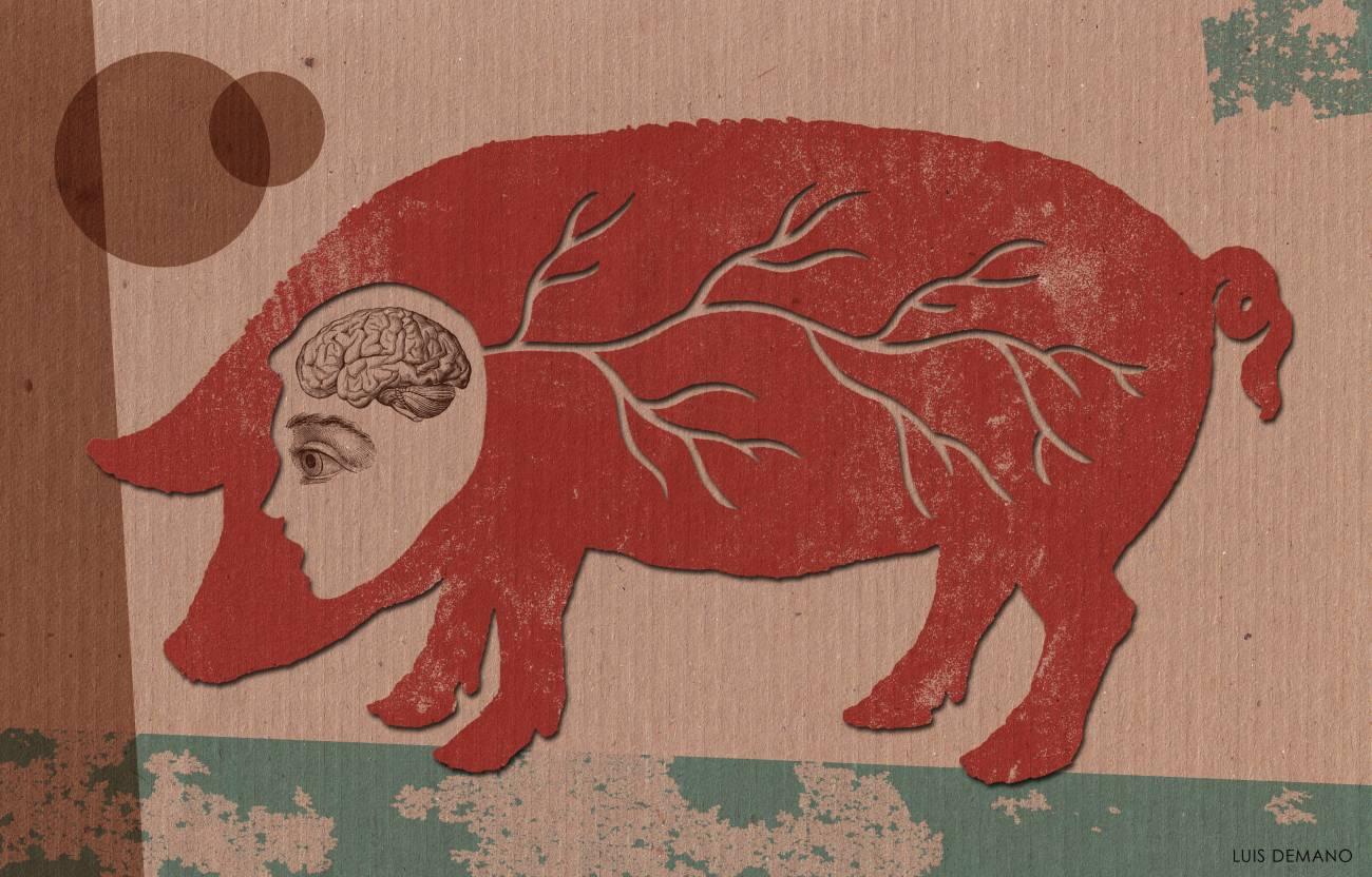 Identifican una rara enfermedad neurológica que afecta a trabajadores de mataderos en EE UU