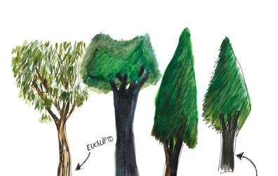Hoy celebramos el Día Forestal Mundial