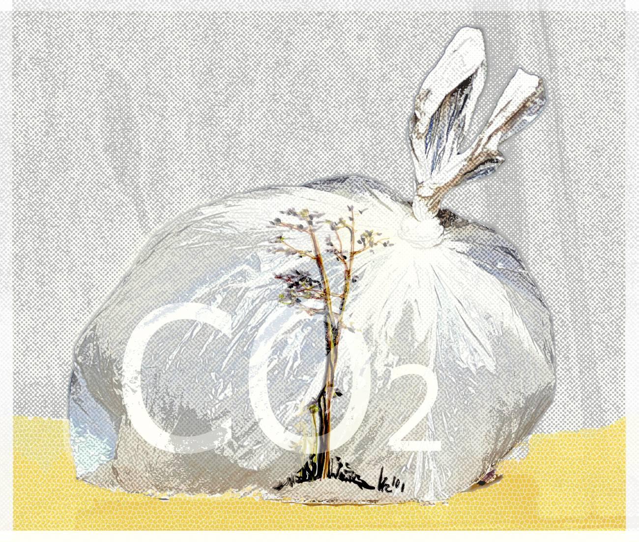 Las nuevas condiciones climáticas requieren nuevos cultivos