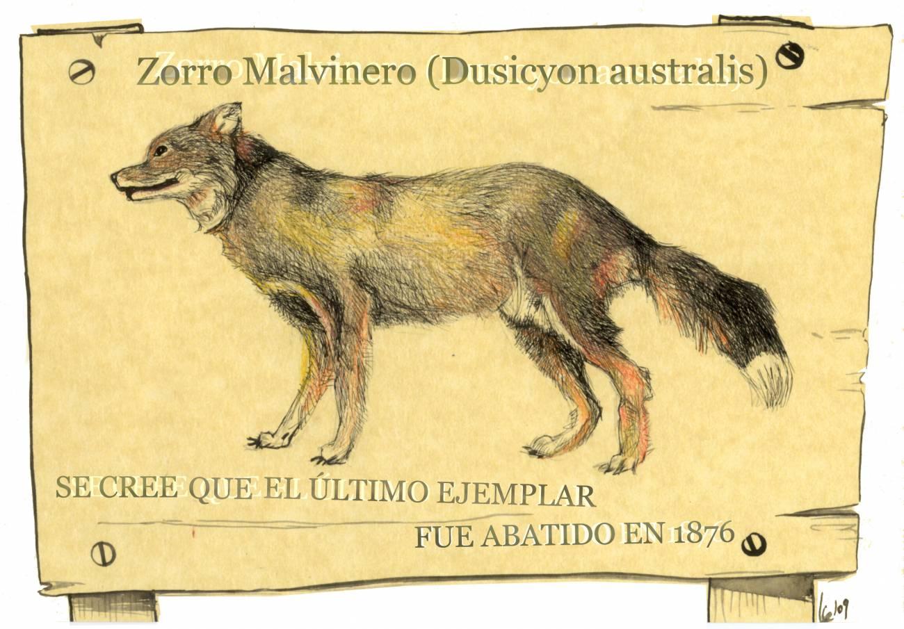 Tratan de desentrañar el misterio del zorro de las Malvinas