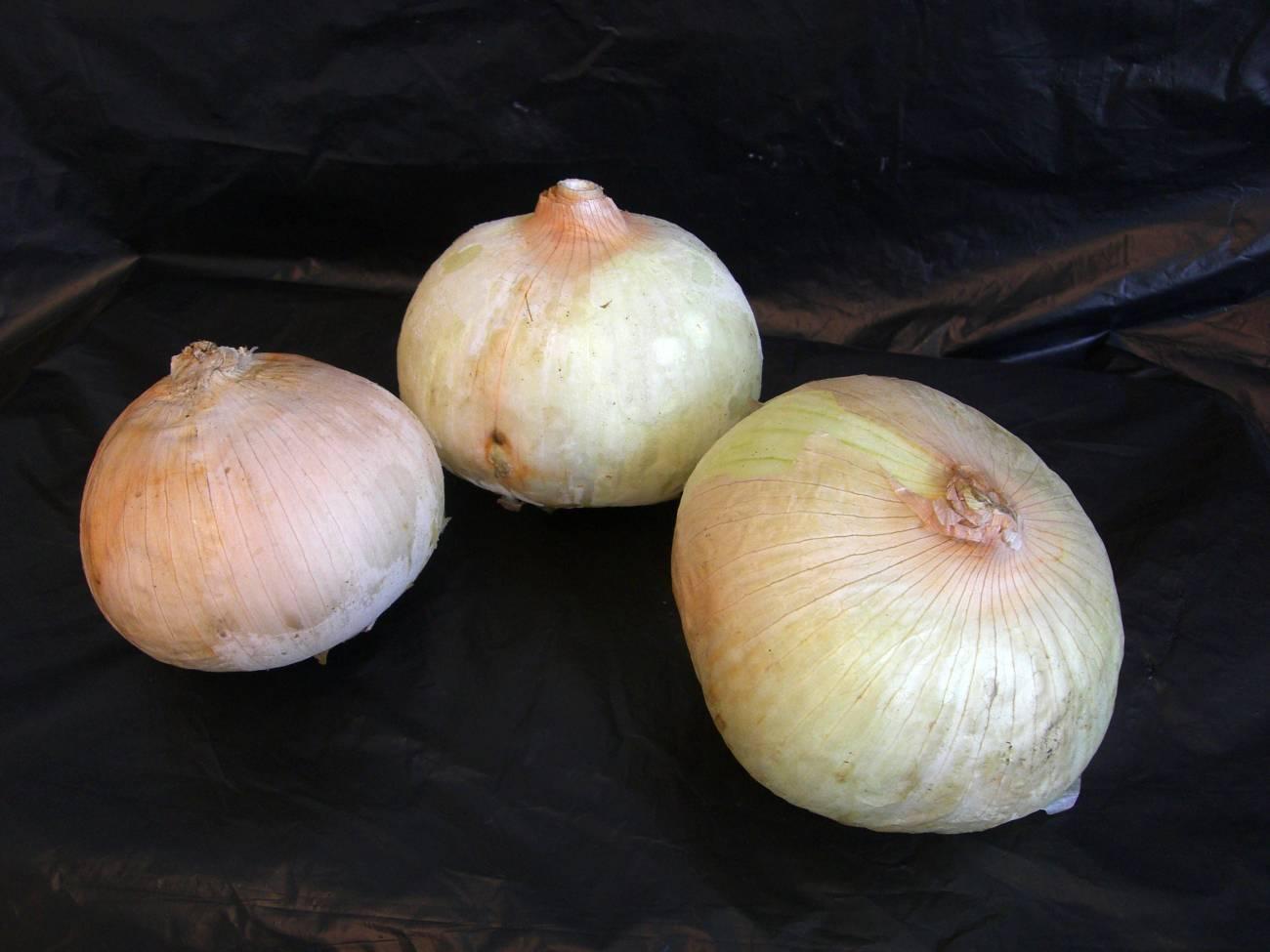 La cebolla, una alternativa natural a los conservantes artificiales