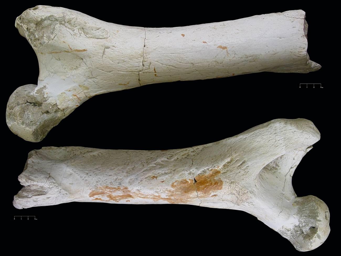 Terrassa estuvo habitada por humanos hace ya un millón de años