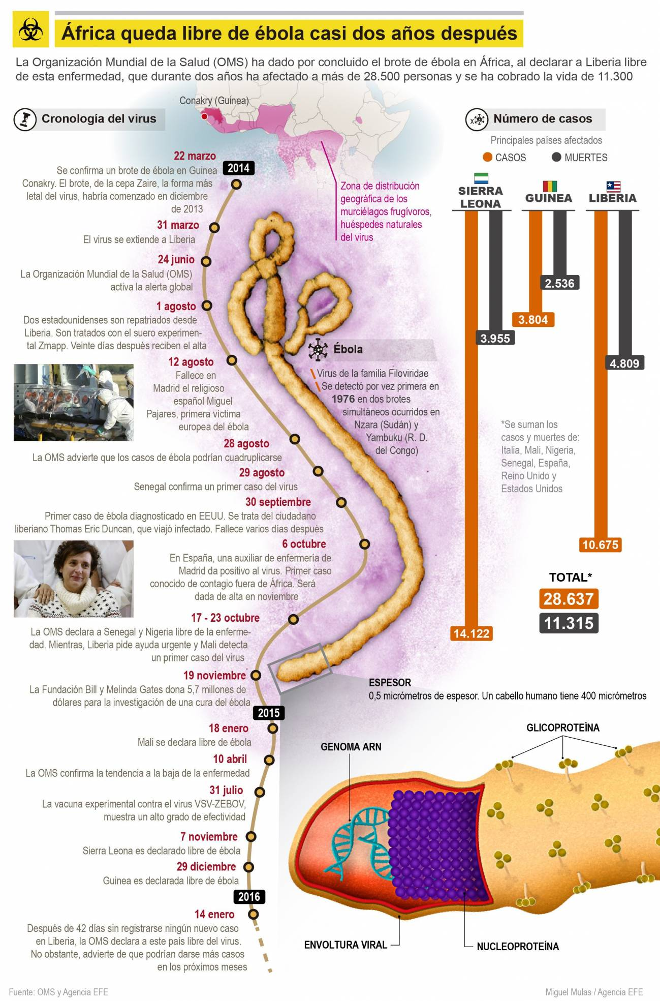 Infografía del último brote de ébola. / Efe