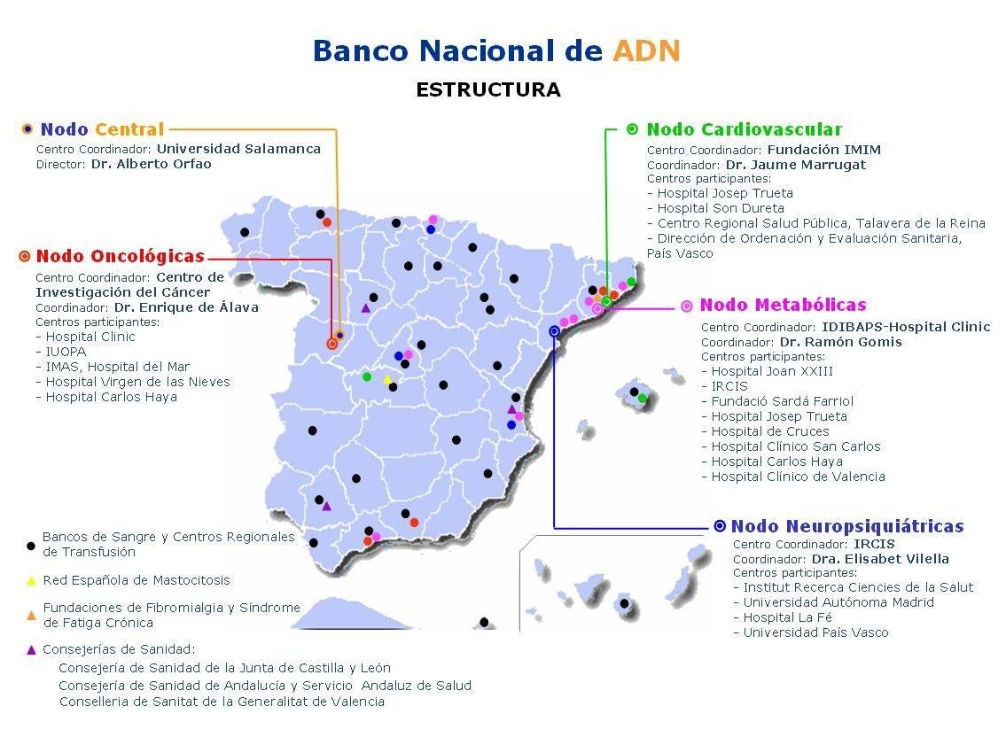 Mapa elaborado por la Fundación Genoma España que muestra los distintos nodos del Banco Nacional de ADN
