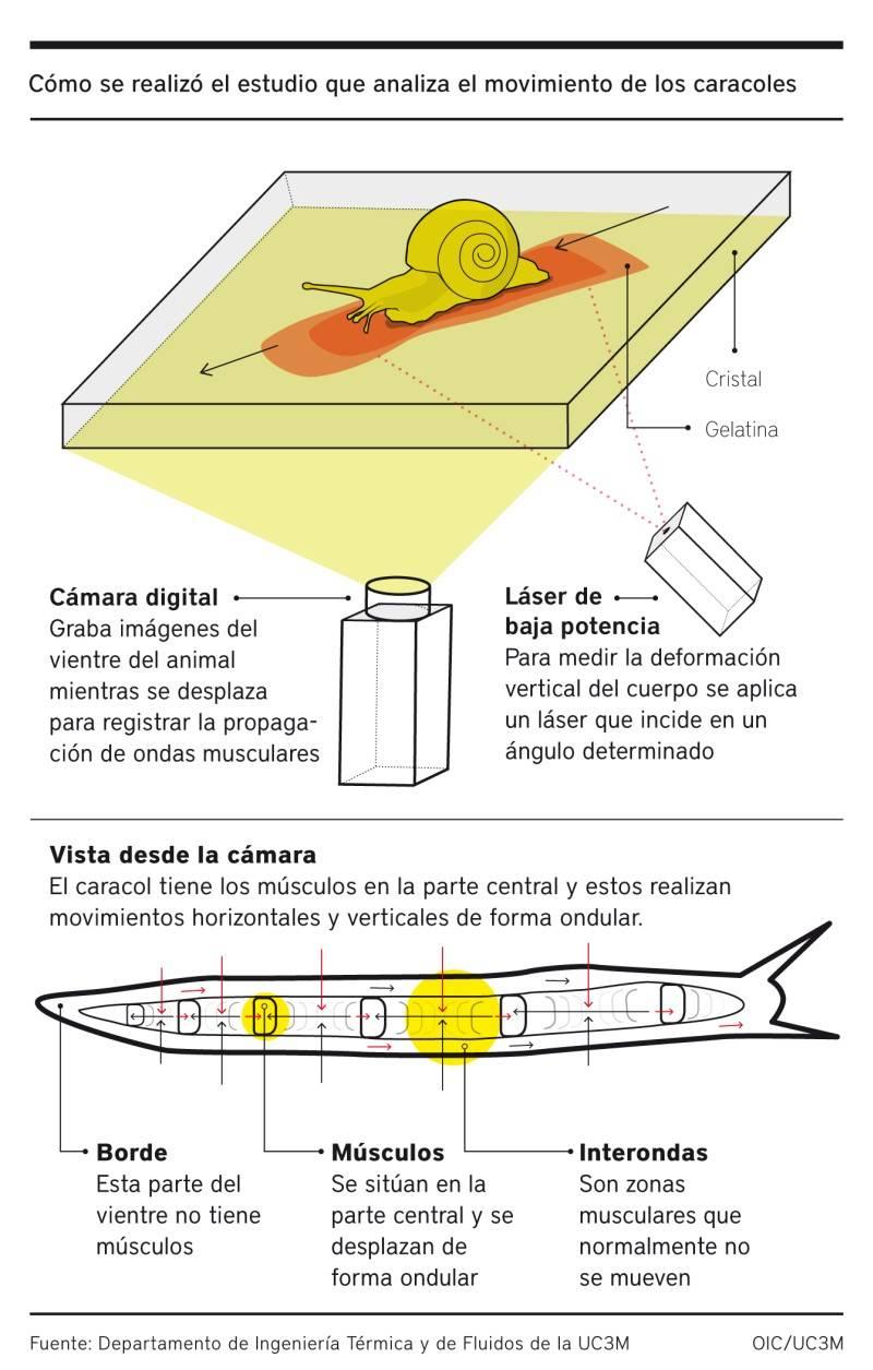 infografia caracoles