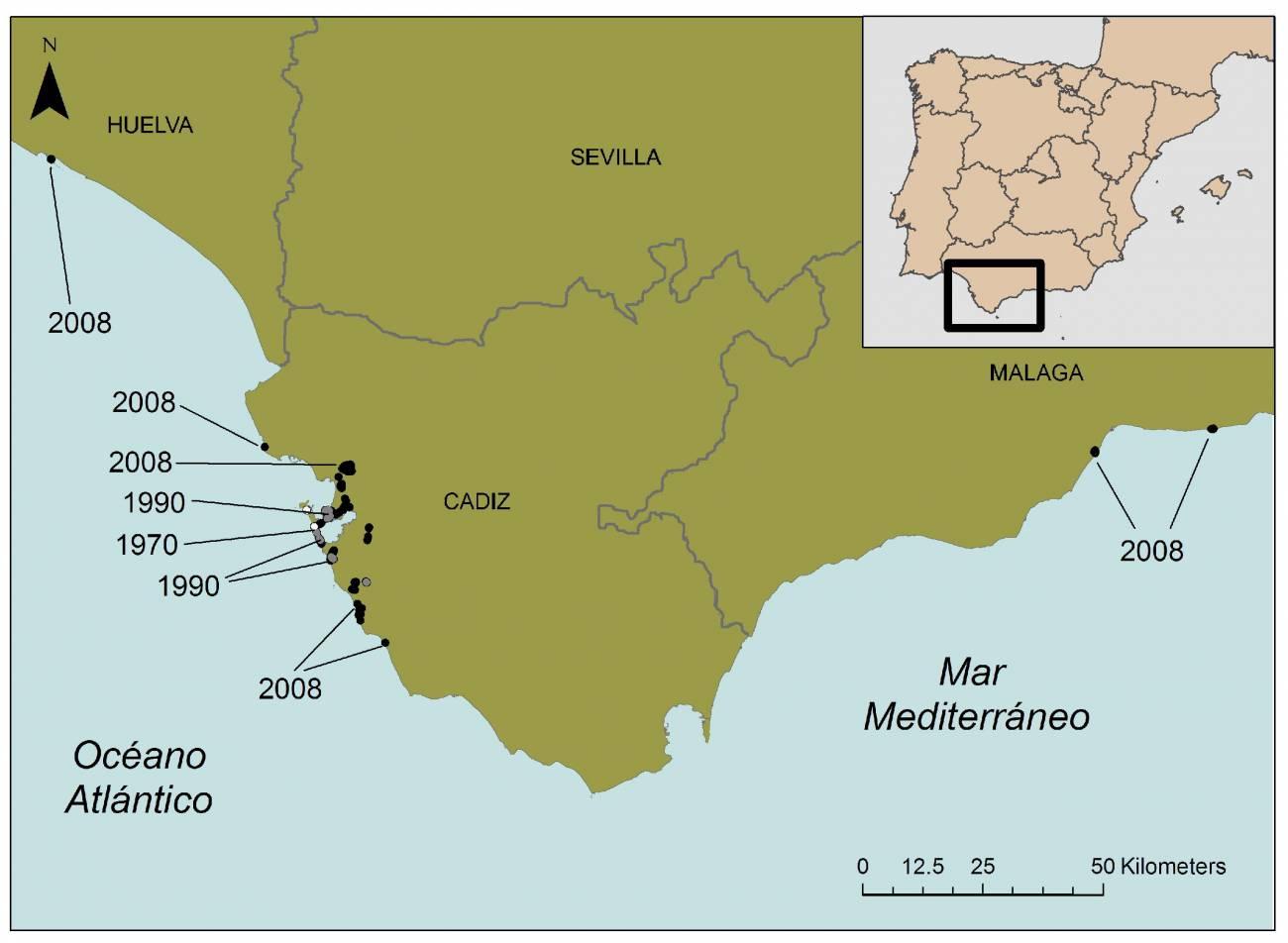 Una planta exótica invade las dunas costeras del sur de España