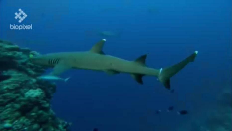alimentar a los tiburones perjudica su salud