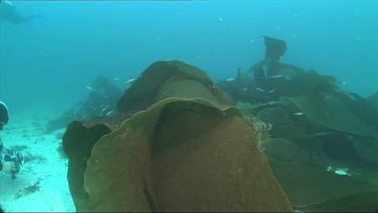 Día de los Océanos: cada año se pierde el 5% de los prados submarinos
